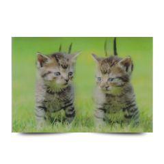 3D Fotokarten Katzenbaby - Postkarten 16cm x 11cm