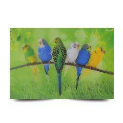 3D Fotokarten Wellensittiche - Postkarten 16cm x 11cm