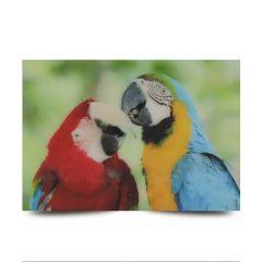 3D Fotokarten Papageienpärchen - Magnetkarte 9cm x 7cm