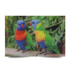 3D Fotokarten Papageienpärchen Loris - Postkarten 16cm x 11cm
