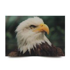 3D Fotokarten Weißkopfseeadler - Postkarten 16cm x 11cm