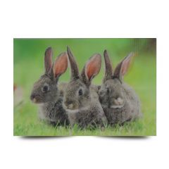 3D Fotokarten Kaninchen - Postkarten 16cm x 11cm