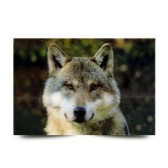 3D Fotokarten Wolfskopf - Postkarten 16cm x 11cm