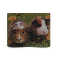 3D Fotokarten Meerschweinchen- Postkarten 16cm x 11cm