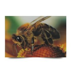3D Fotokarten Honigbiene - Postkarten 16cm x 11cm