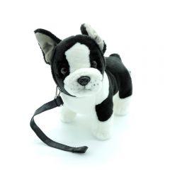 Französische Bulldogge mit Leine